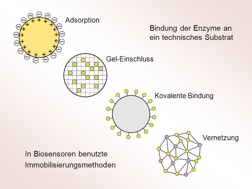 Bindung der Enzyme an ein technisches Substrat