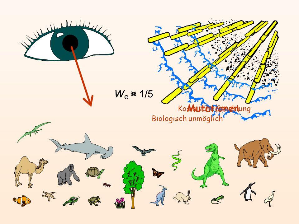 We > 1/5 We < 1/5 Mutationen Kosmische Strahlung
