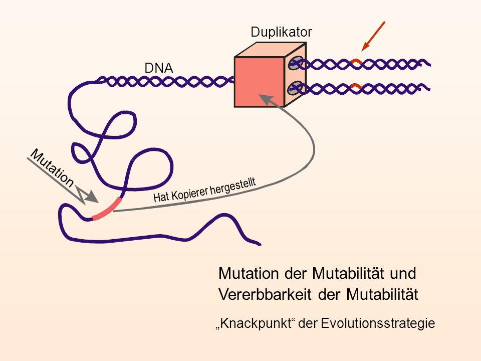 Mutation der Mutabilität und Vererbbarkeit der Mutabilität