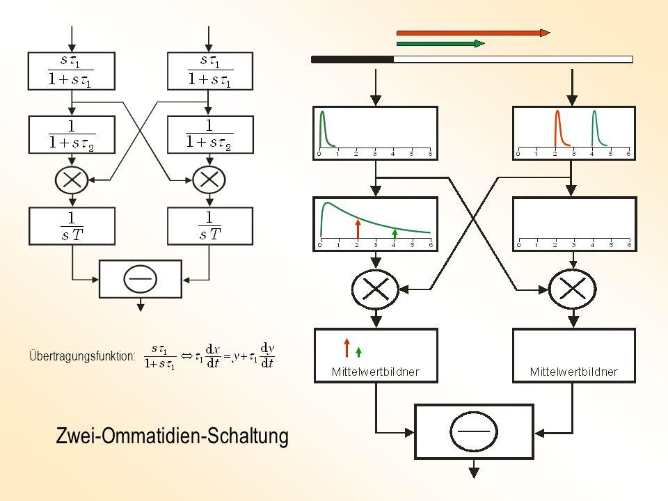 Zwei-Ommatidien-Schaltung