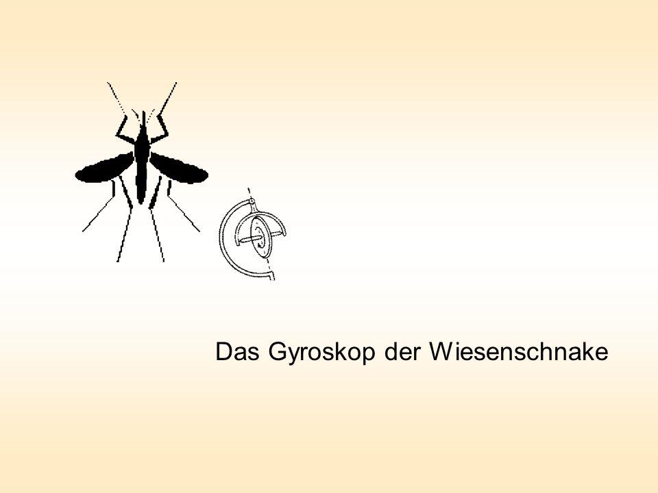 Das Gyroskop der Wiesenschnake