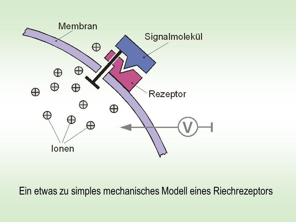 Ein etwas zu simples mechanisches Modell eines Riechrezeptors