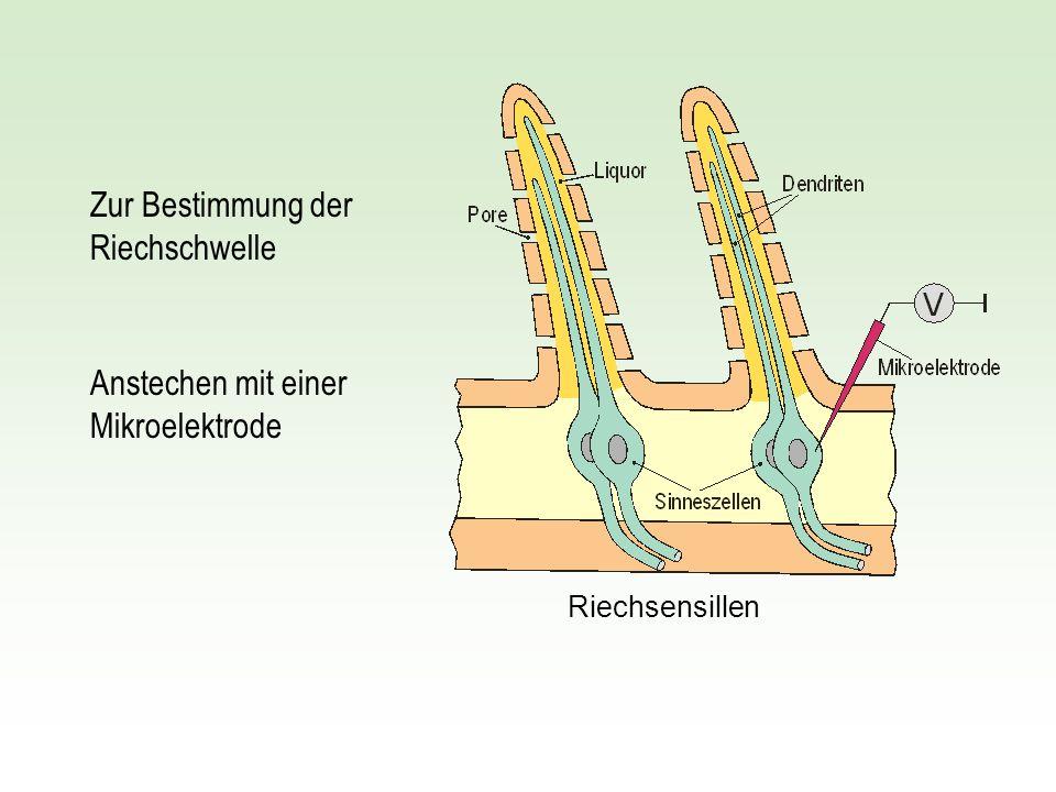 Zur Bestimmung der Riechschwelle