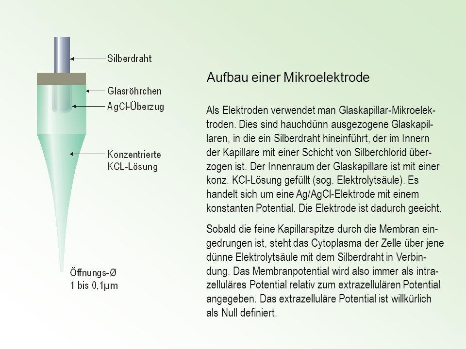 Aufbau einer Mikroelektrode