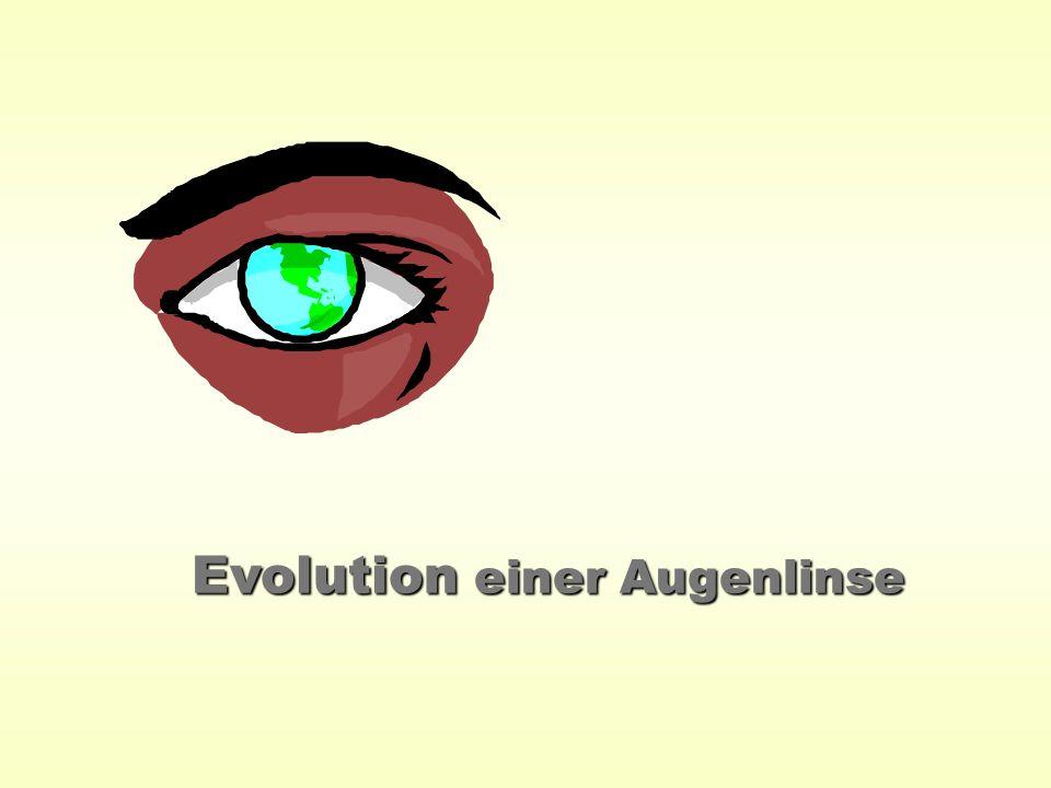 Evolution einer Augenlinse