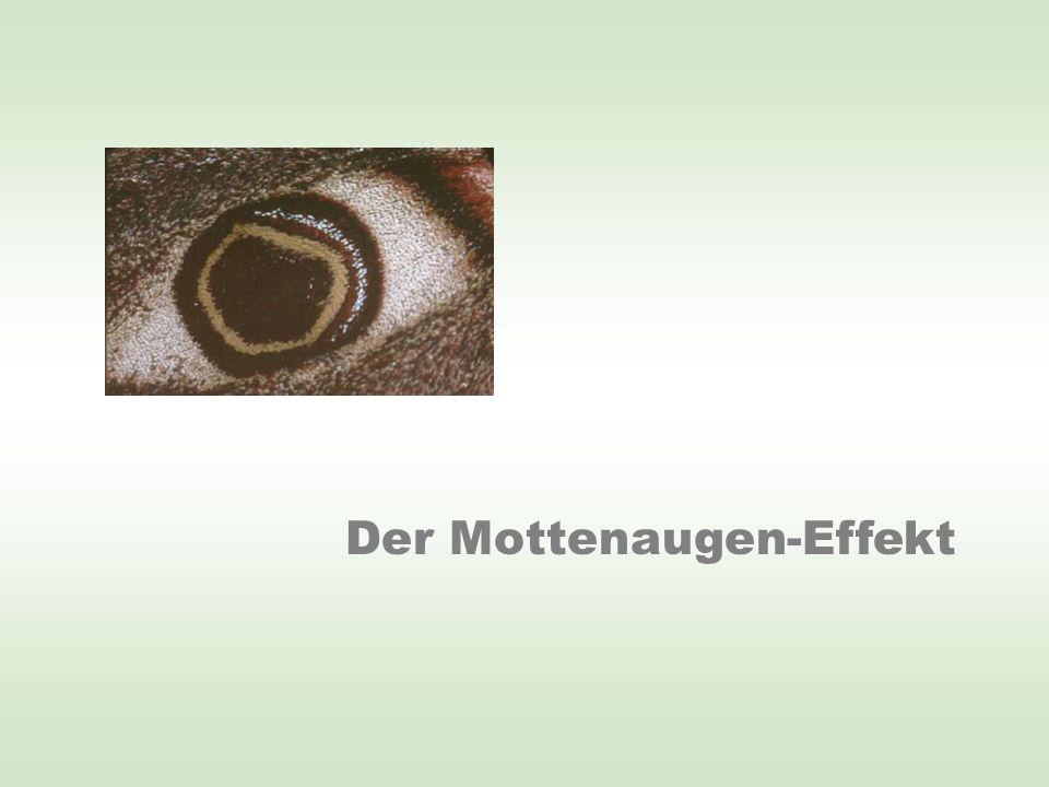 Der Mottenaugen-Effekt