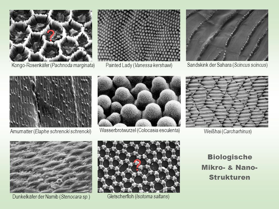Mikro- & Nano-Strukturen