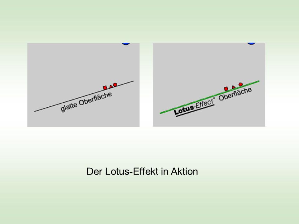 Der Lotus-Effekt in Aktion