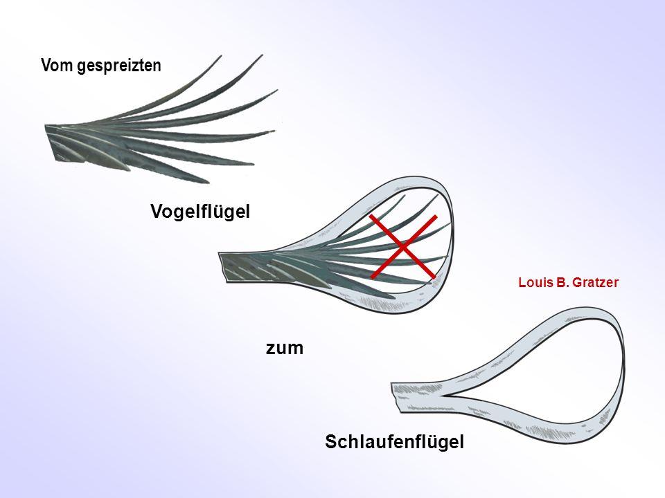 Vom gespreizten Vogelflügel Louis B. Gratzer zum Schlaufenflügel