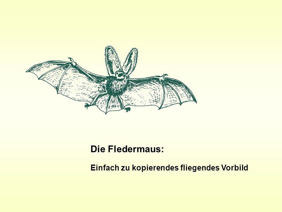 Die Fledermaus: Einfach zu kopierendes fliegendes Vorbild