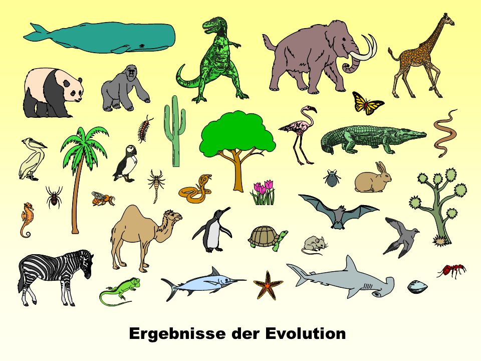 Ergebnisse der Evolution