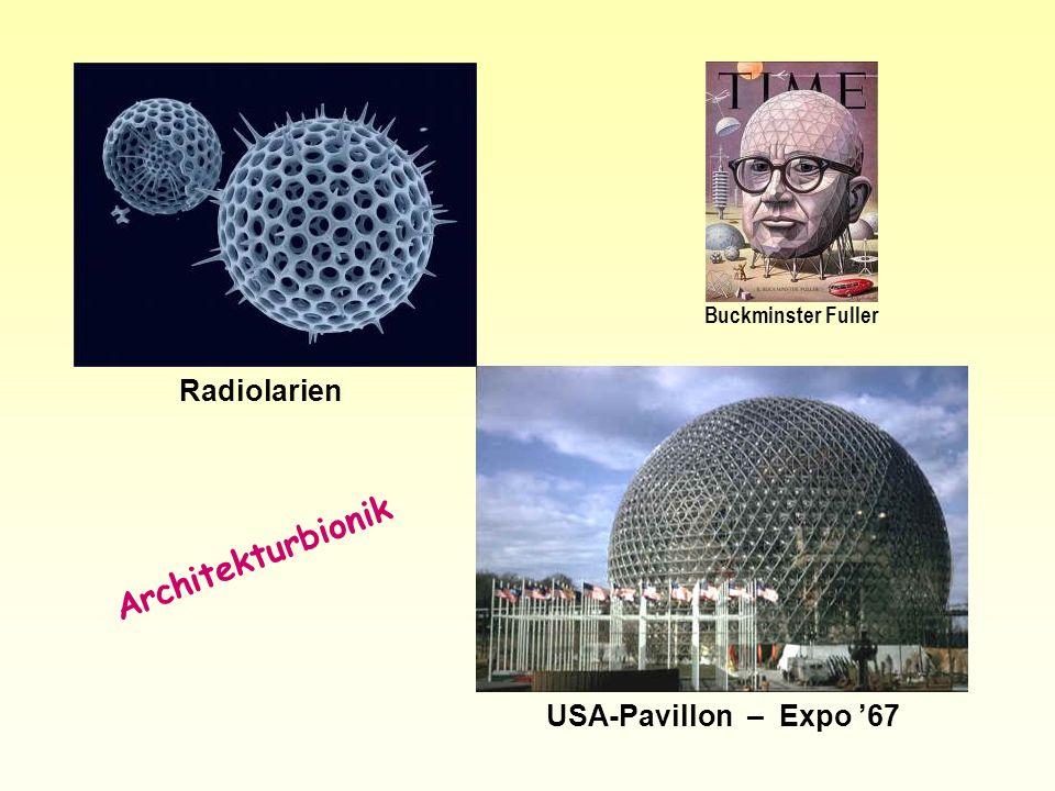 Architekturbionik Radiolarien USA-Pavillon – Expo '67