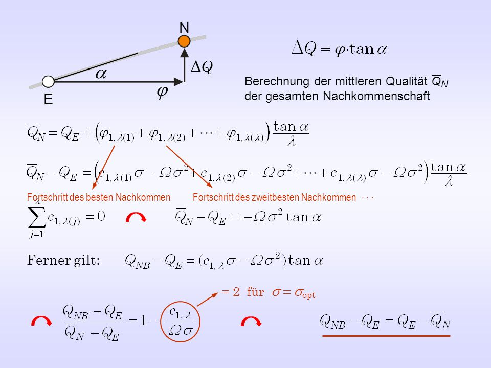 N DQ. a. Berechnung der mittleren Qualität QN der gesamten Nachkommenschaft. j. E. Fortschritt des besten Nachkommen.