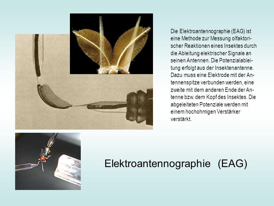 Elektroantennographie (EAG)