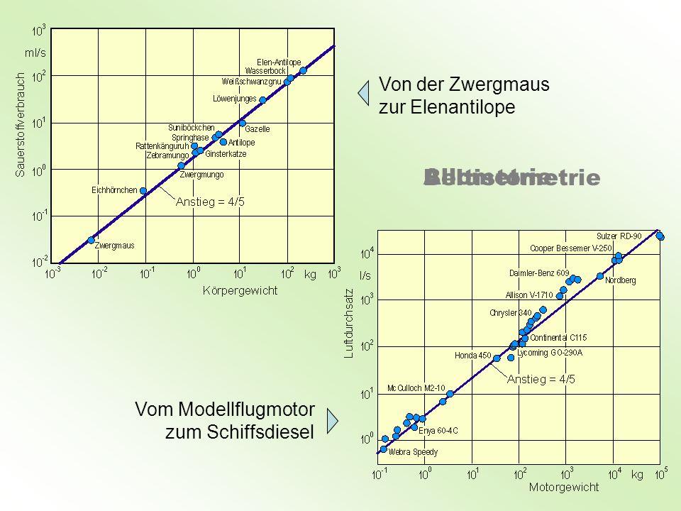 Allometrie Beltistometrie Von der Zwergmaus zur Elenantilope