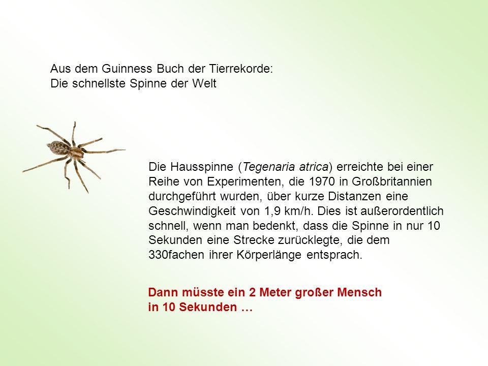 Aus dem Guinness Buch der Tierrekorde: Die schnellste Spinne der Welt