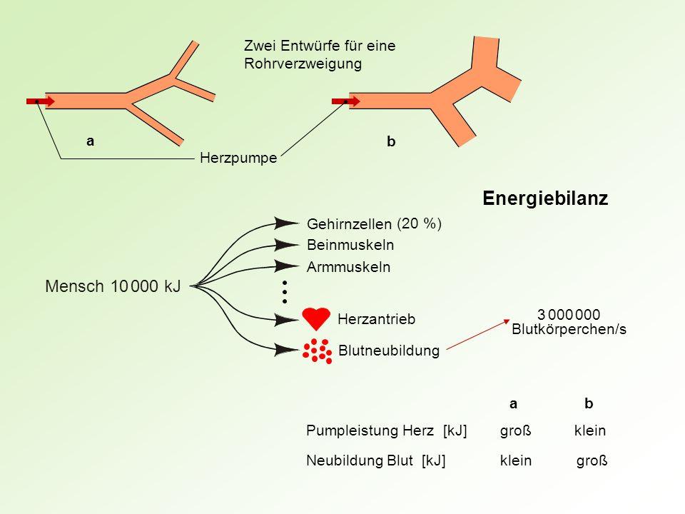 Energiebilanz Mensch 10 000 kJ Zwei Entwürfe für eine Rohrverzweigung