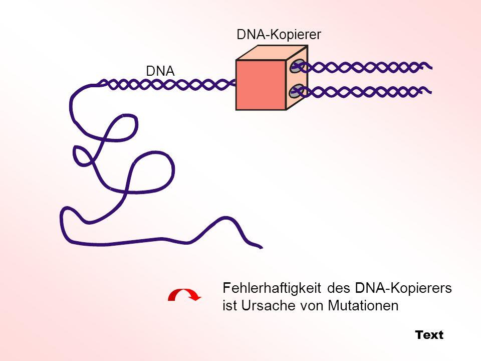 Fehlerhaftigkeit des DNA-Kopierers ist Ursache von Mutationen