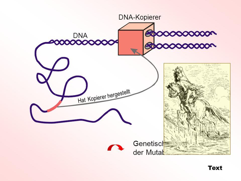 Genetische Individualität der Mutabilität