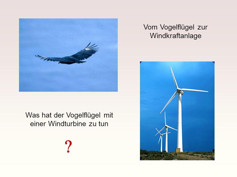 Vom Vogelflügel zur Windkraftanlage
