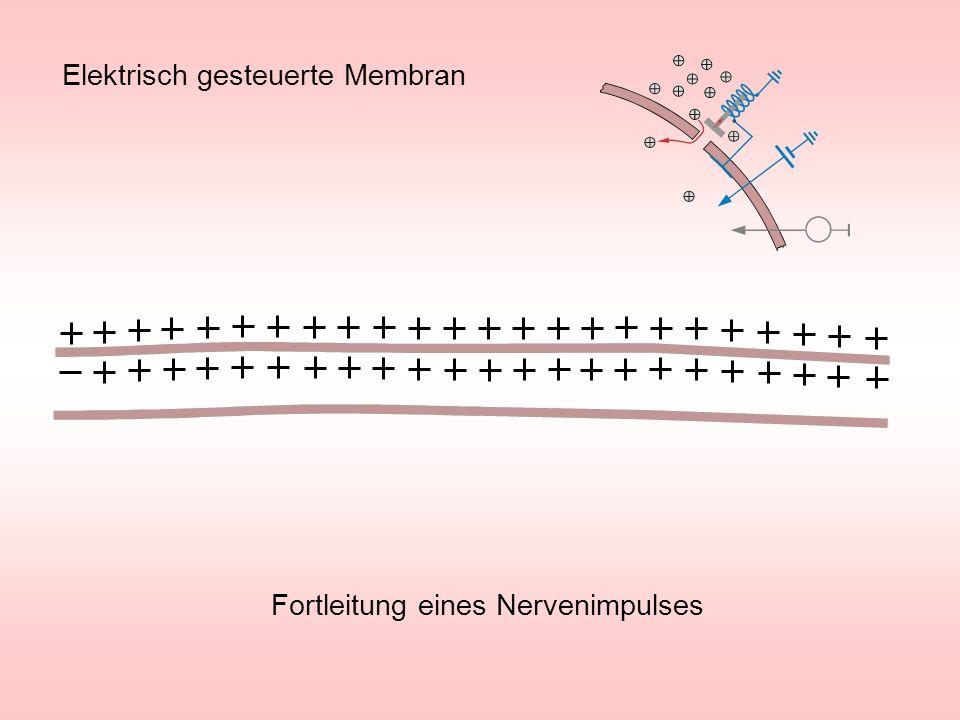 Elektrisch gesteuerte Membran