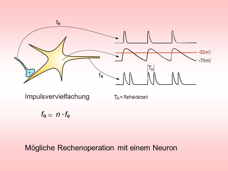 . fa = n fe Mögliche Rechenoperation mit einem Neuron