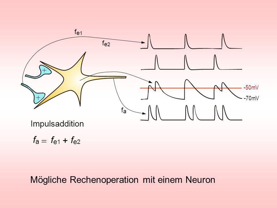 Mögliche Rechenoperation mit einem Neuron