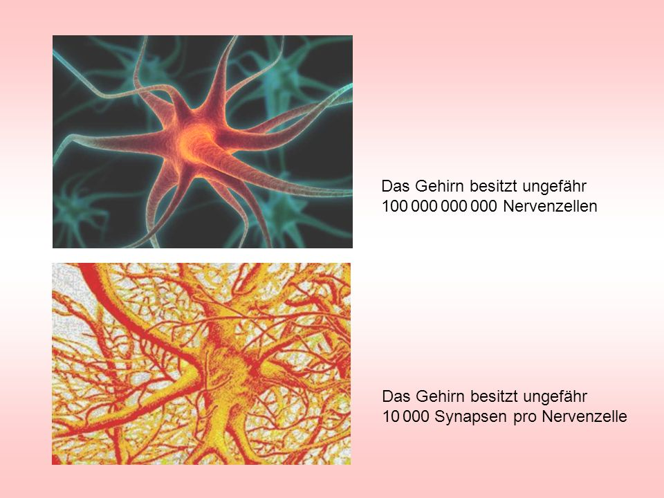 Das Gehirn besitzt ungefähr 100 000 000 000 Nervenzellen