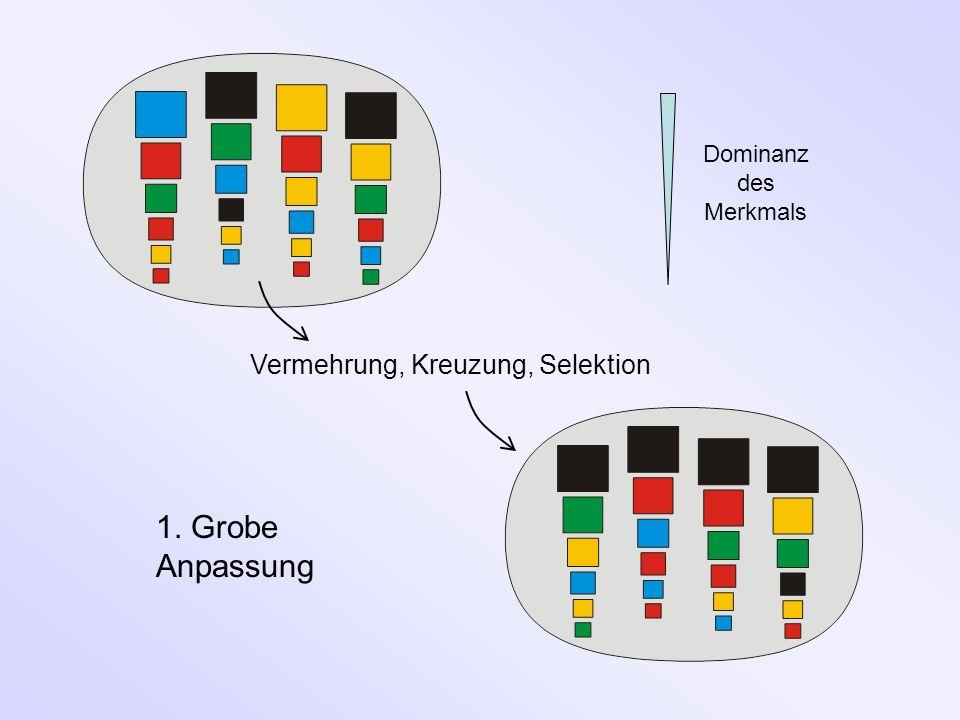 1. Grobe Anpassung Vermehrung, Kreuzung, Selektion