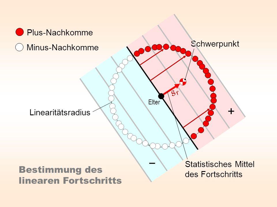 + − sr Bestimmung des linearen Fortschritts Plus-Nachkomme Schwerpunkt