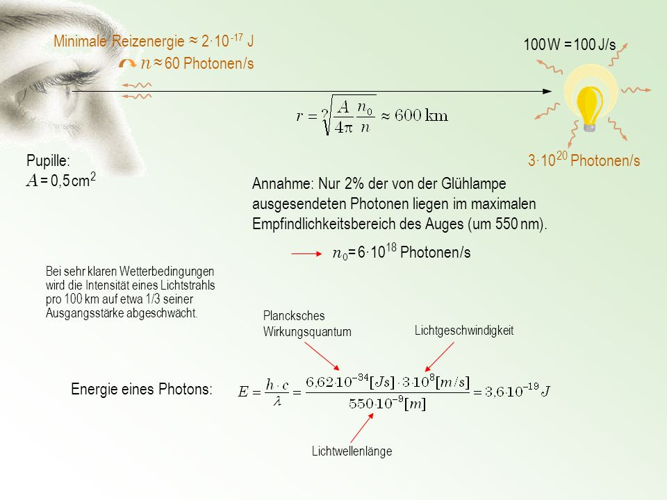 n ≈ 60 Photonen /s Minimale Reizenergie ≈ 2·10 -17 J 100 W = 100 J/s