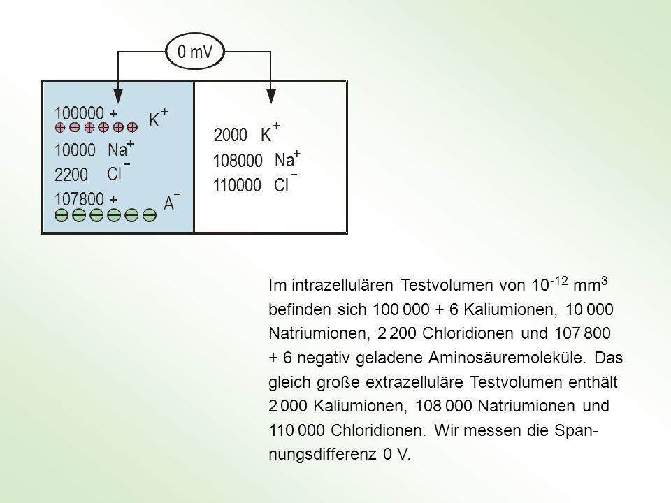 0 mV 100000 + 10000. 2200. 107800 + K. Na. Cl. A. + 2000. 108000. 110000. Im intrazellulären Testvolumen von 10 -12 mm3.