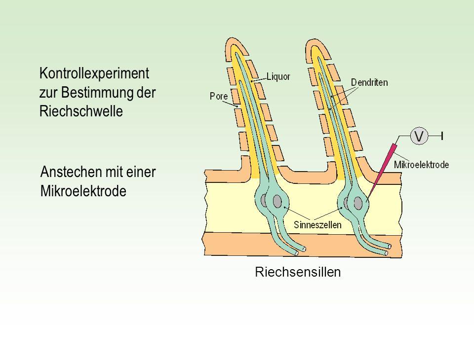 Kontrollexperiment zur Bestimmung der Riechschwelle