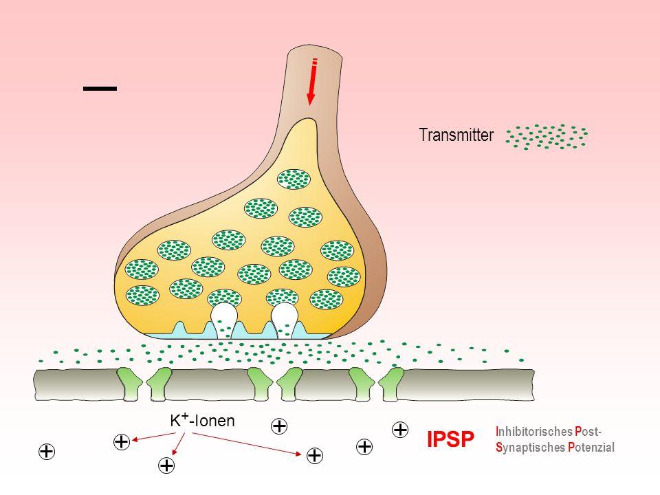 Transmitter K+-Ionen IPSP Inhibitorisches Post-Synaptisches Potenzial