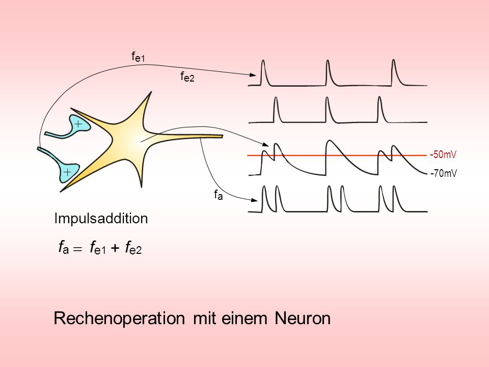 Rechenoperation mit einem Neuron