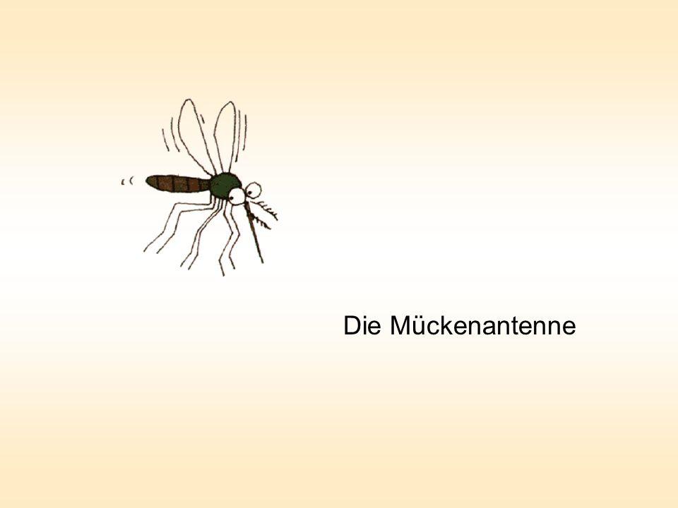 Die Mückenantenne
