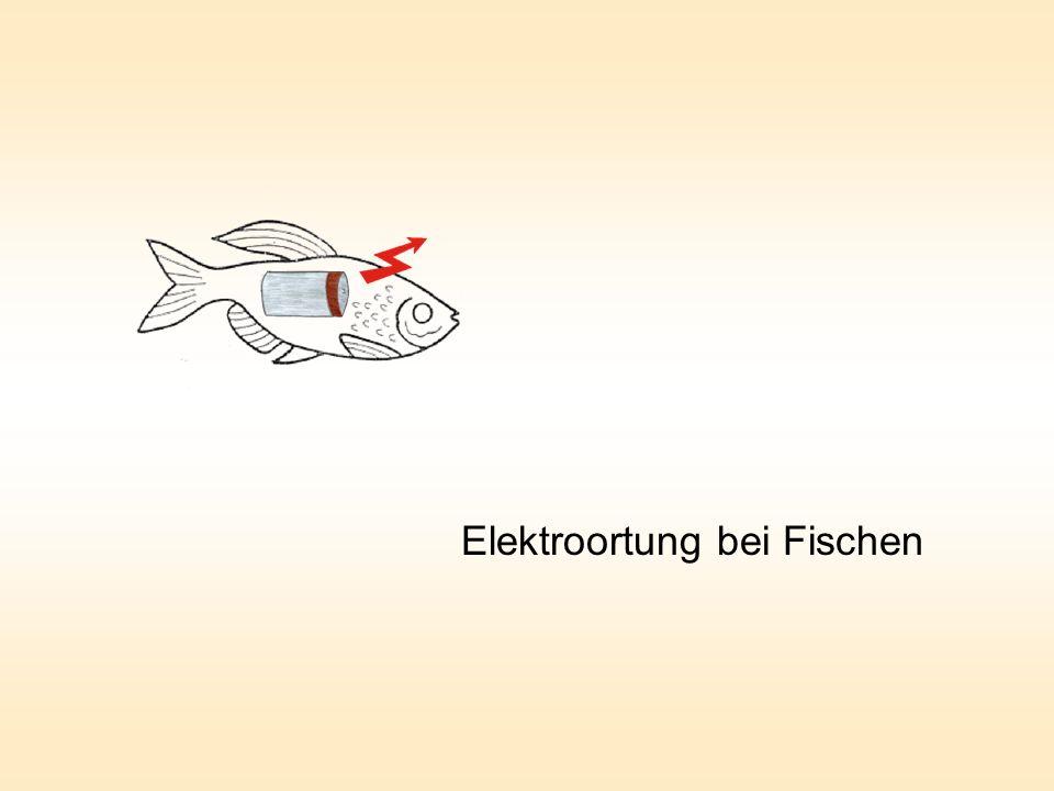 Elektroortung bei Fischen