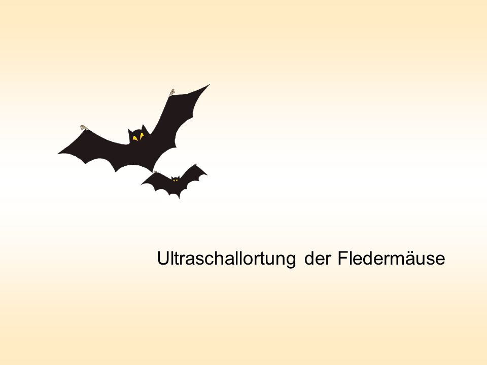 Ultraschallortung der Fledermäuse
