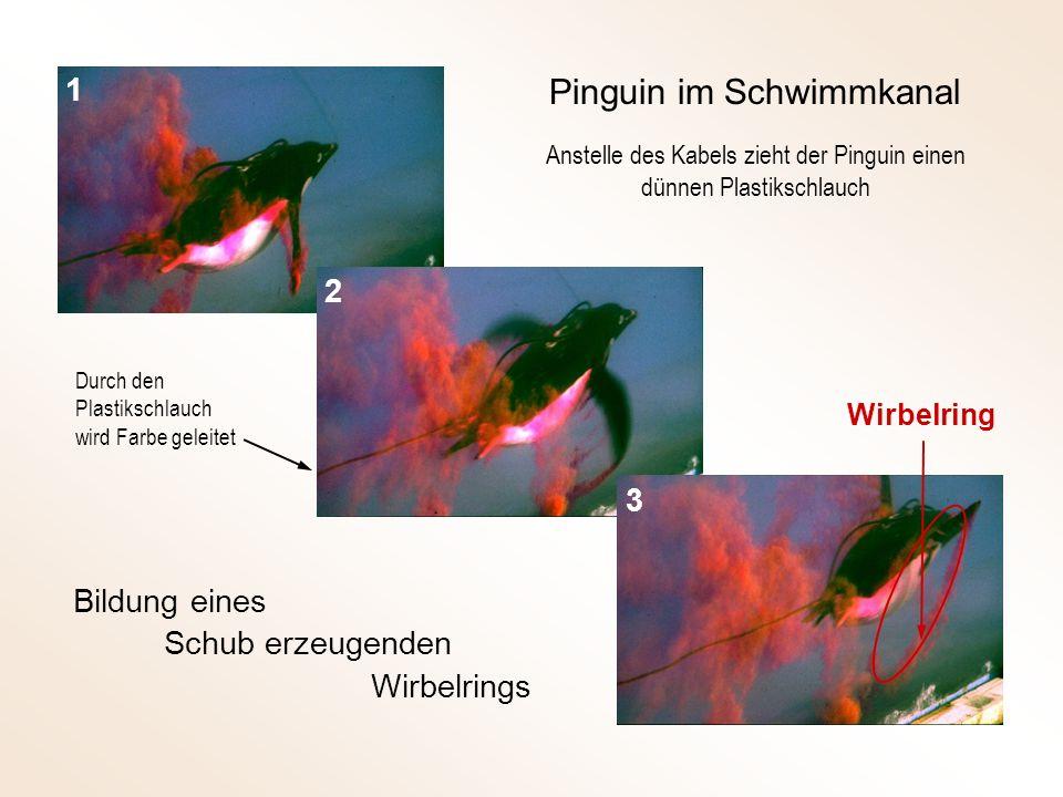 Anstelle des Kabels zieht der Pinguin einen dünnen Plastikschlauch