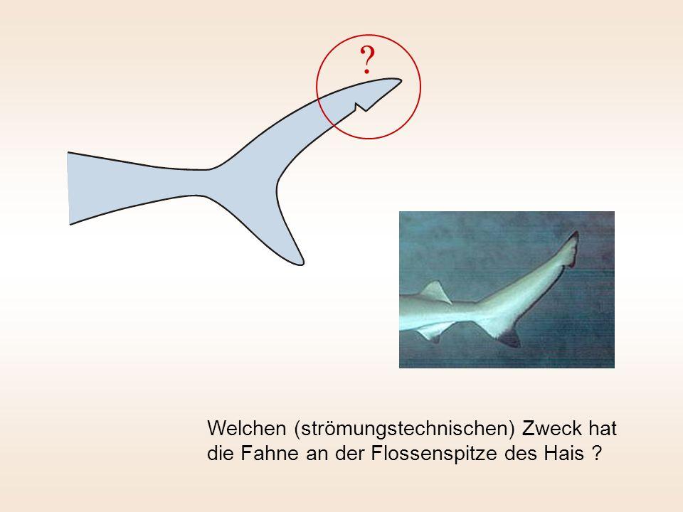 Welchen (strömungstechnischen) Zweck hat die Fahne an der Flossenspitze des Hais