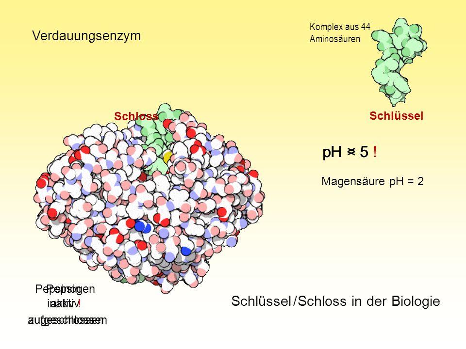pH > 5 pH < 5 ! Schlüssel / Schloss in der Biologie