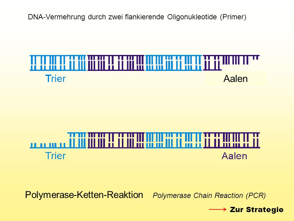 Aalen Polymerase-Ketten-Reaktion Polymerase Chain Reaction (PCR)