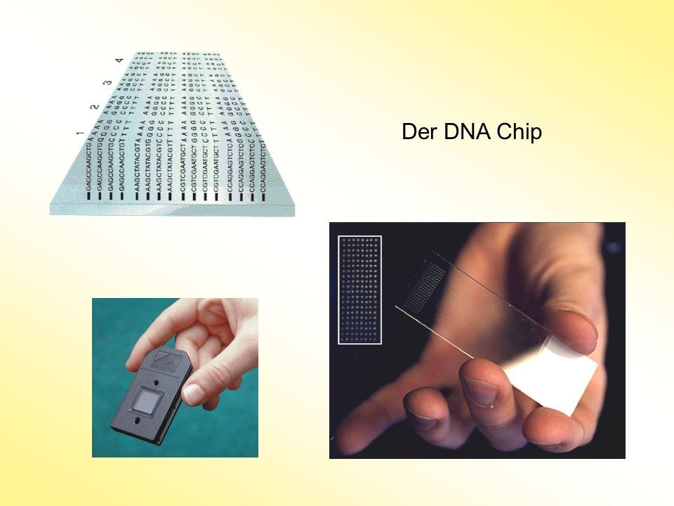 Der DNA Chip