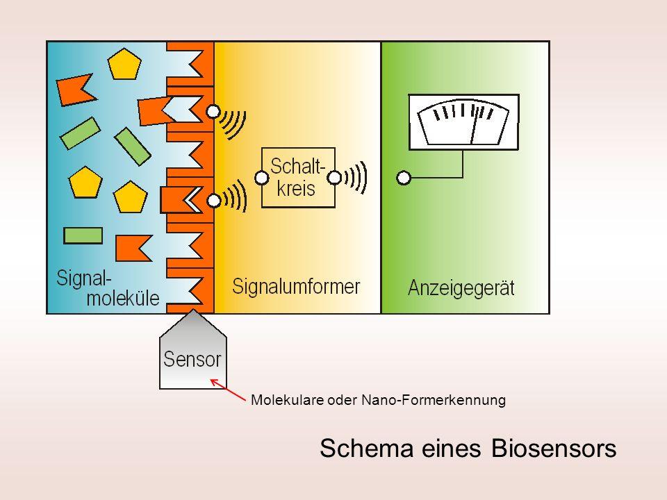 Schema eines Biosensors