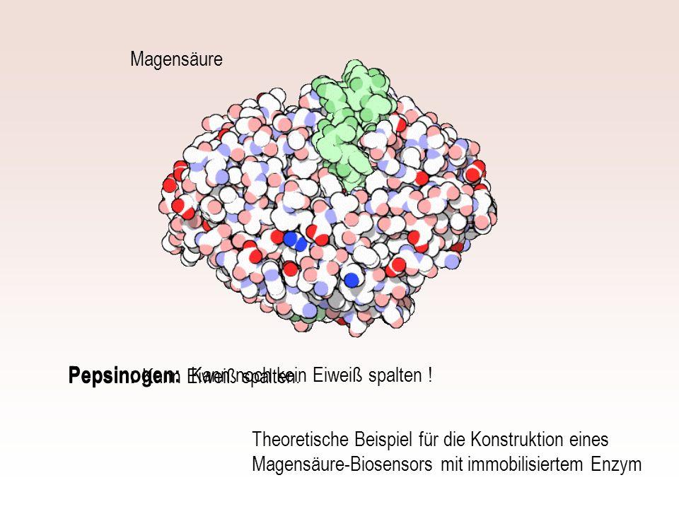 Pepsinogen: Pepsin: Magensäure Kann Eiweiß spalten.
