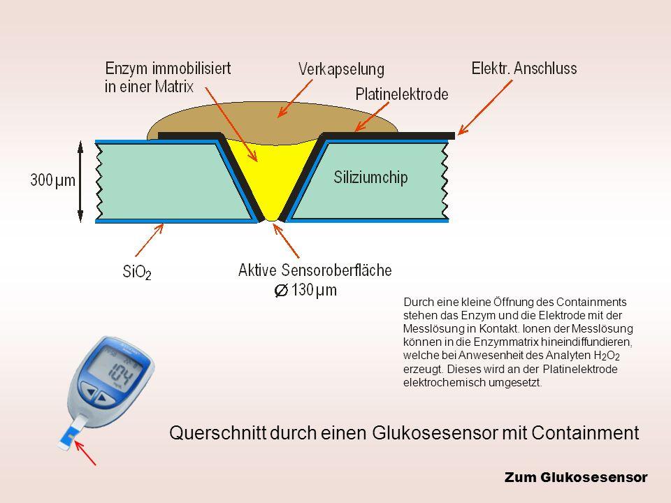 Querschnitt durch einen Glukosesensor mit Containment