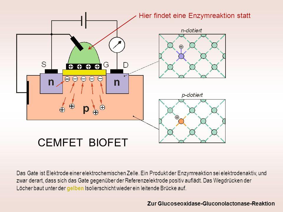 CEMFET BIOFET Hier findet eine Enzymreaktion statt