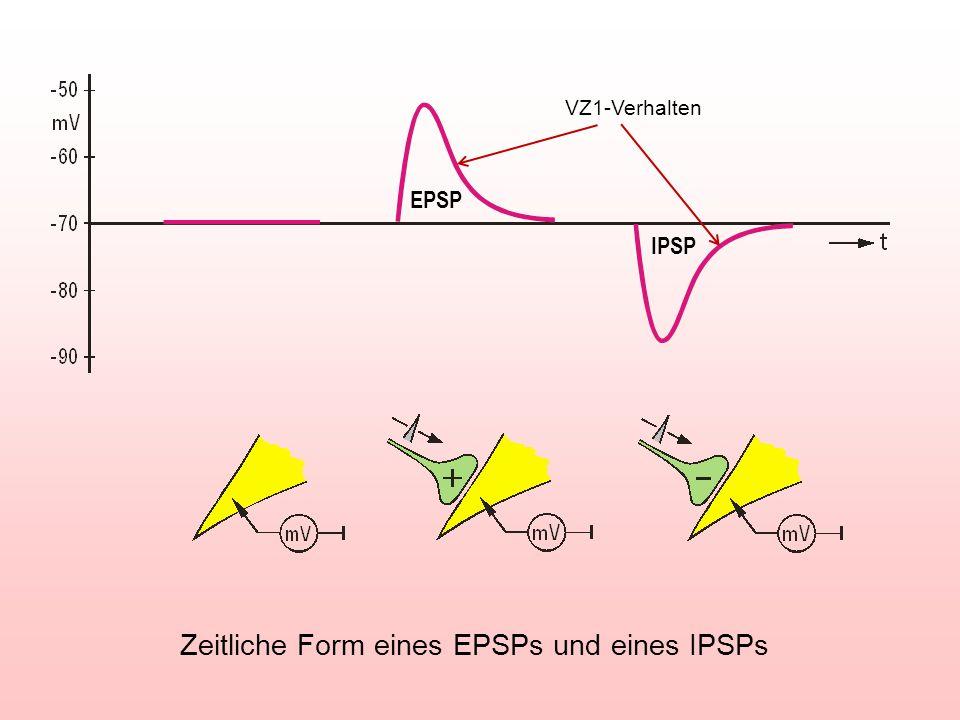 Zeitliche Form eines EPSPs und eines IPSPs