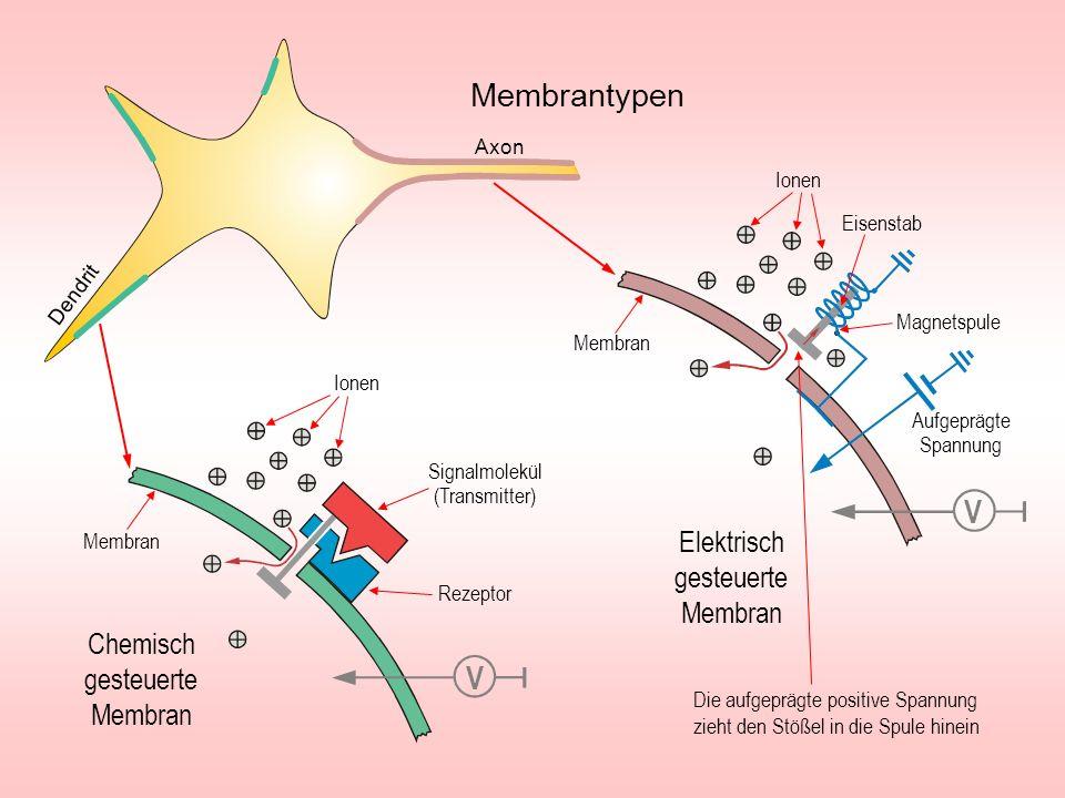 Membrantypen V V Elektrisch gesteuerte Membran