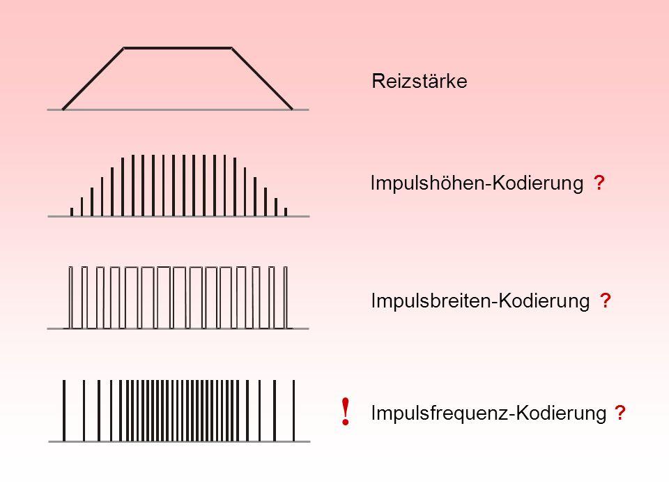 ! Reizstärke Impulshöhen-Kodierung Impulsbreiten-Kodierung